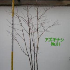 アズキナシ  No,31