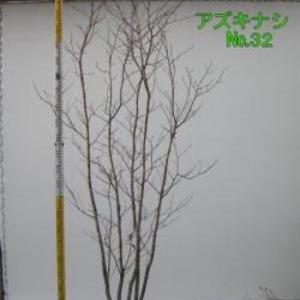 アズキナシ  No,32