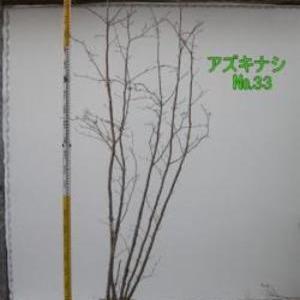 アズキナシ  No,33