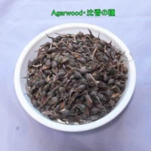 沈香・Agarwoodの種 500粒