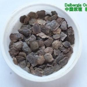 中国紫檀の種 100粒